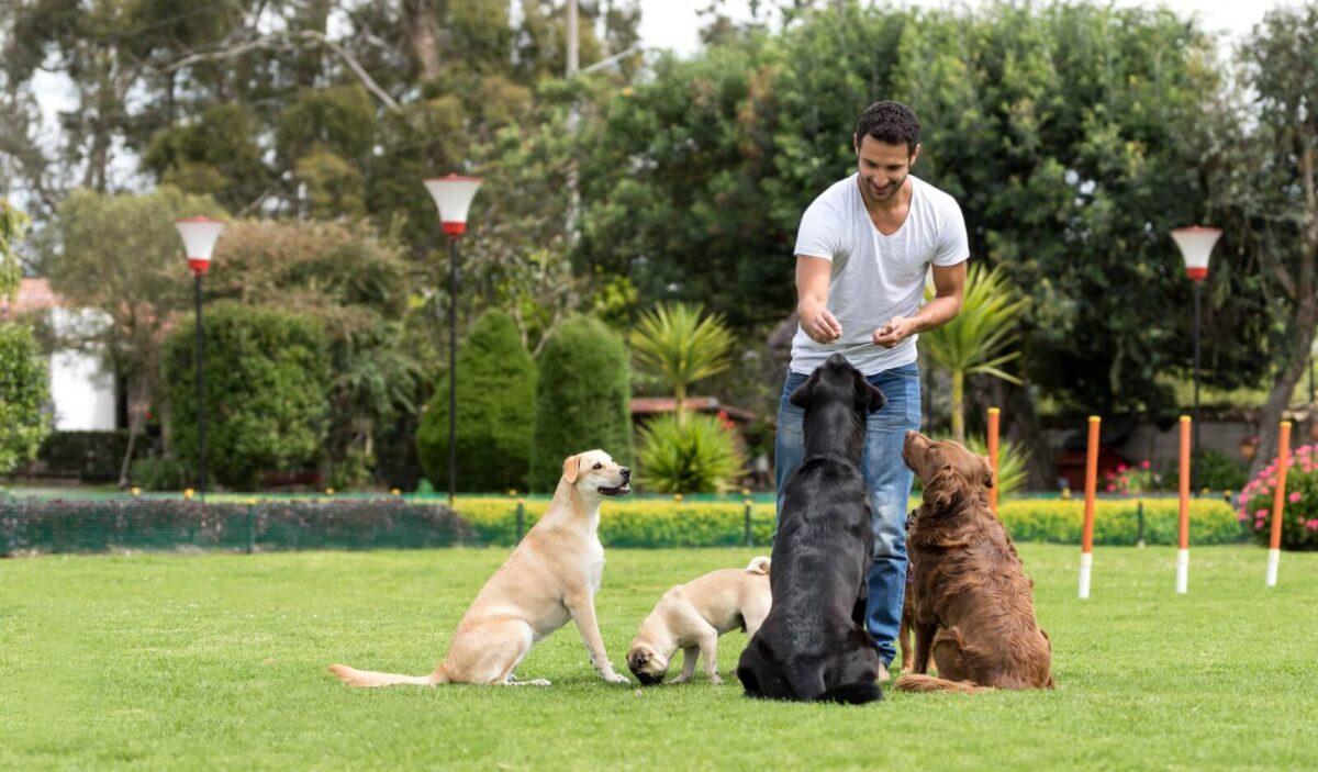 A importância do Adestramento de cães